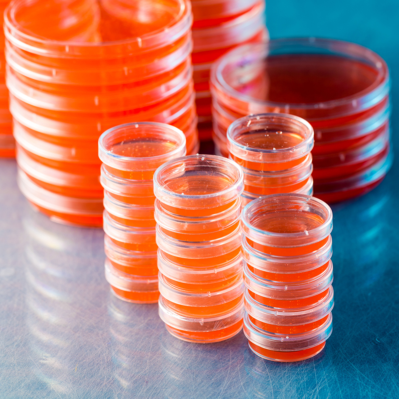Microbiología y patología